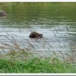 Viewing Alaskan Wildlife in Portage