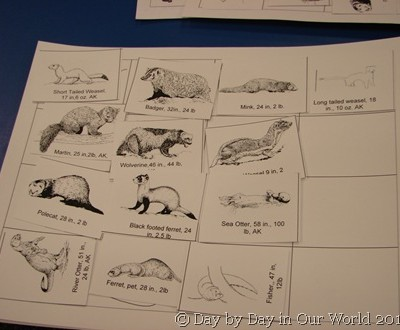 Science in the Library ~ Weasels
