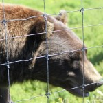 Revisiting the Wildlife Refuge in Portage