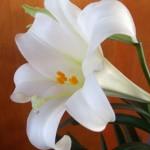 40 Days of Seeking Him Lent 2012~ Awaiting Easter