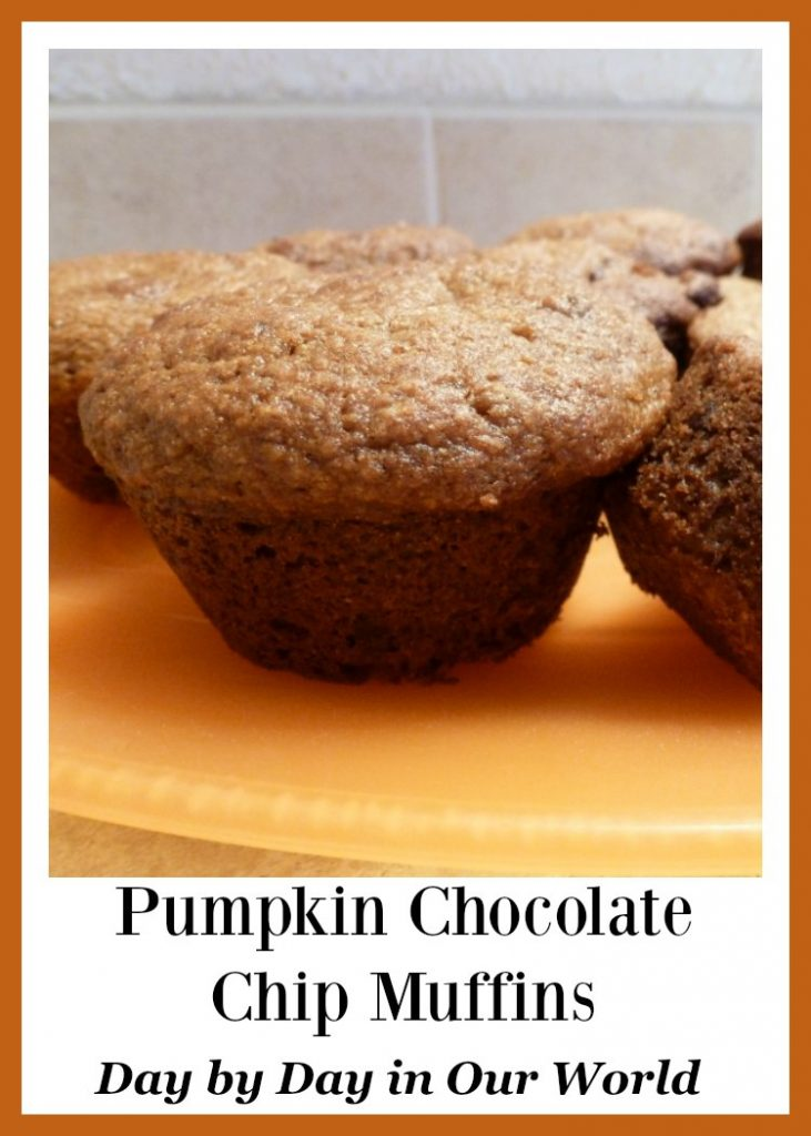 Enjoy homemade pumpkin chocolate chip muffins in the fall or anytime of year.