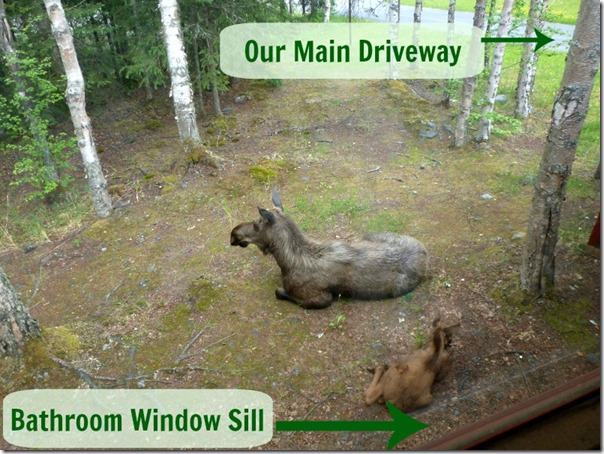 How Close the Moose Are to the House