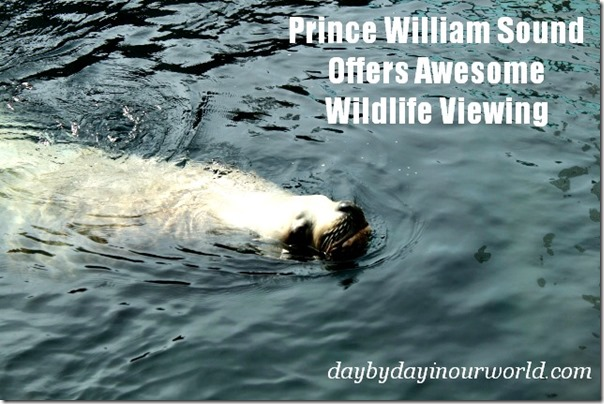Prince William Sound Offers Awesome Wildlife Viewing
