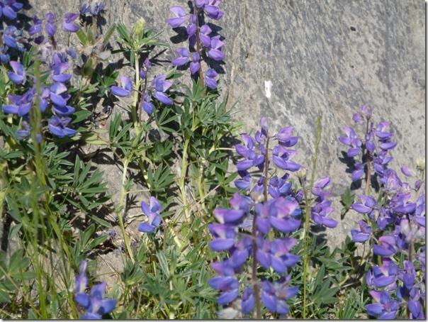 Beautiful Flowers at Bird Point Alaska