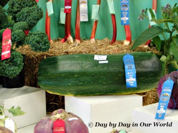 Vegetables at Alaska State Fair 2011