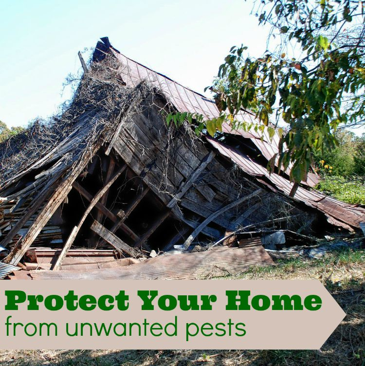 Protect your Home from Unwanted pests Orkin can help #LearnWithOrkin