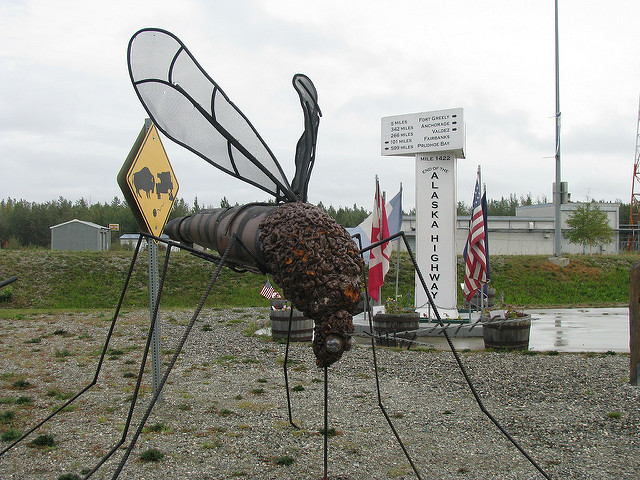 We grow them big in the 49th state. Check out this Mosquito at Delta Junction Alaska