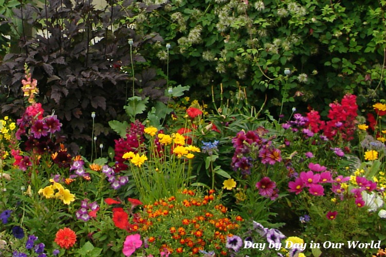 Summer Flowers Beckon for More Time Outside