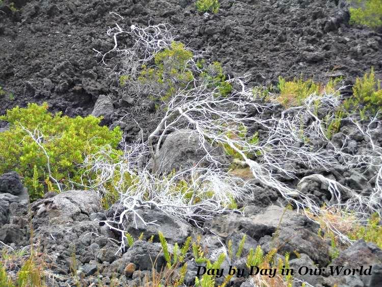 New Life Amid Destruction | Volcano National Park on Hawaii