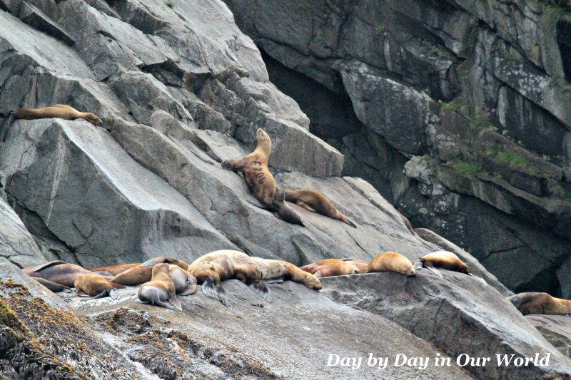 A Kenai Fjords Cruise out of Seward Alaska afforded the opportunity to see marine life in their natural habitat.